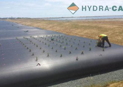 de-sludging-water-bags-planting